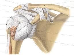 schouderblad-mobiliteit