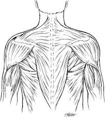 Thoracohumeral
